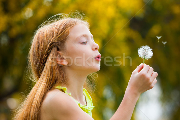 wishes child blowing dandelion,  Stock photo © godfer