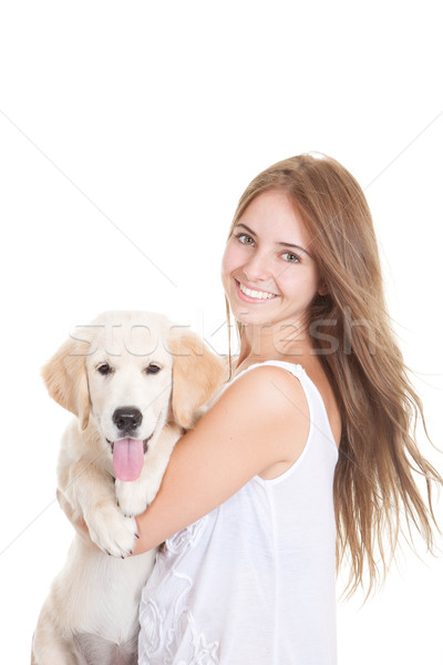 pet golden retriever puppy dog Stock photo © godfer