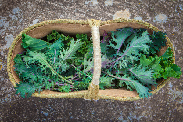basket of freshly picked egological kale Stock photo © godfer