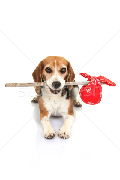 Stock photo: concept for runaway dog , pets holiday home or lost animal
