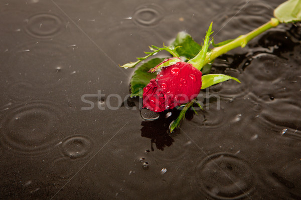 lost love and death concept Stock photo © godfer