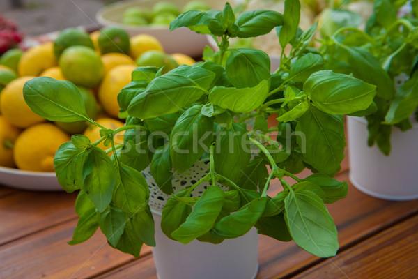 ökológiai organikus bazsalikom gyógynövények mediterrán gyümölcs Stock fotó © godfer