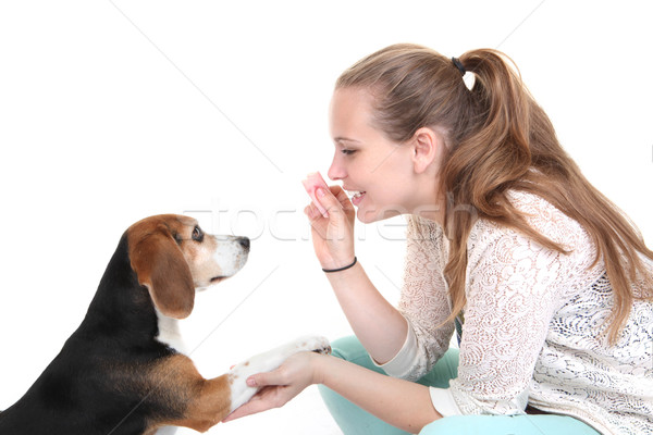 Perro obediencia formación entrenador mascota perros Foto stock © godfer