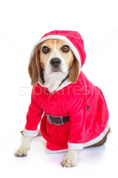Animal Noël vacances cadeau présents Photo stock © godfer