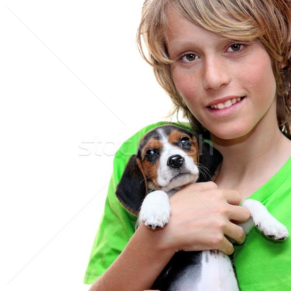 Criança animal de estimação bigle cachorro cão Foto stock © godfer