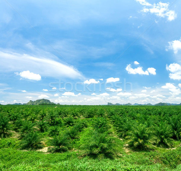 Palm oil plantations Stock photo © goinyk