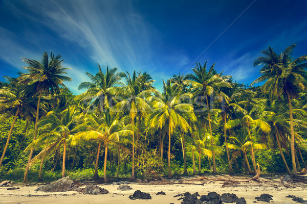 Tropical landscape Stock photo © goinyk