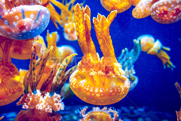 Stock fotó: Narancs · meduza · tenger · kék · óceán · víz