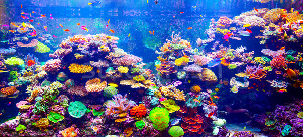 Coral Reef and Tropical Fish Stock photo © goinyk