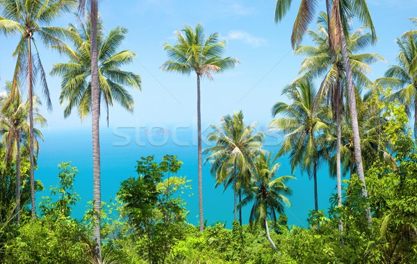 Tropical background Stock photo © goinyk