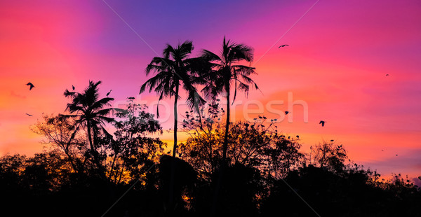 Naplemente madarak madár sziget Sri Lanka nap Stock fotó © goinyk