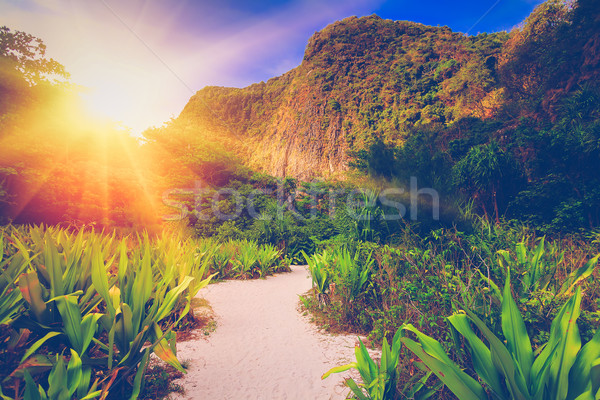 Travel landscape Stock photo © goinyk