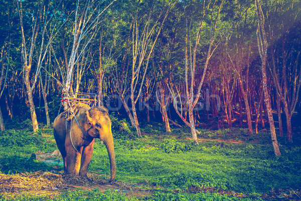 Elephant in Thailand Stock photo © goinyk