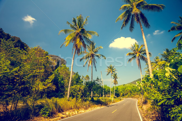 Asfalt road with palm trees  Stock photo © goinyk