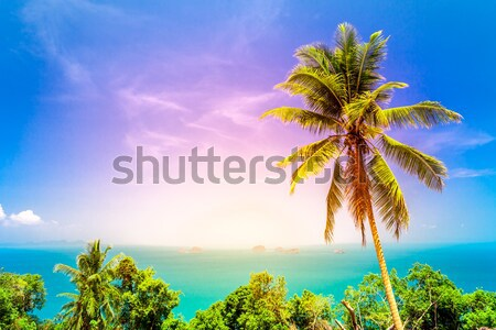 nice tropical background  Stock photo © goinyk