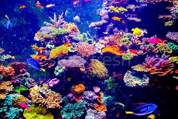 Singapore aquarium Stock photo © goinyk