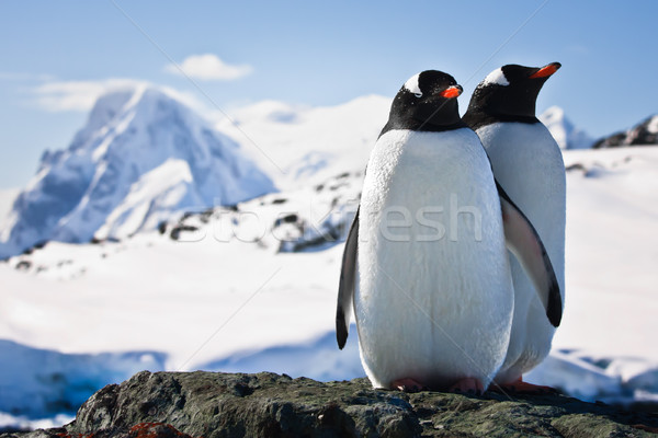 Two penguins  Stock photo © goinyk
