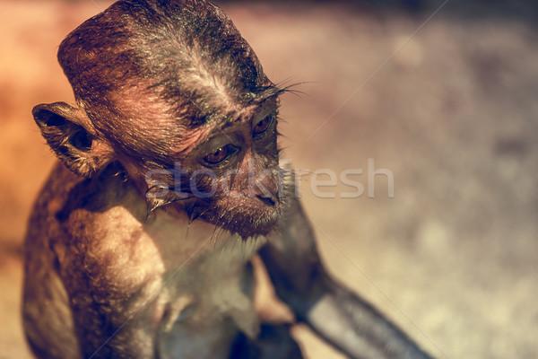 Majom néz szép portré zöld arc Stock fotó © goinyk