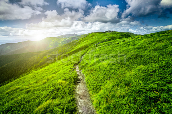 Summer landscape Stock photo © goinyk
