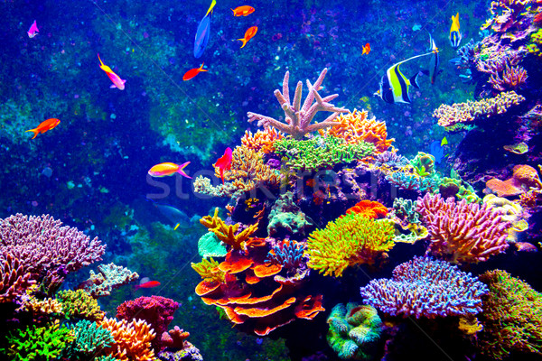 Singapore aquarium Stock photo © goinyk