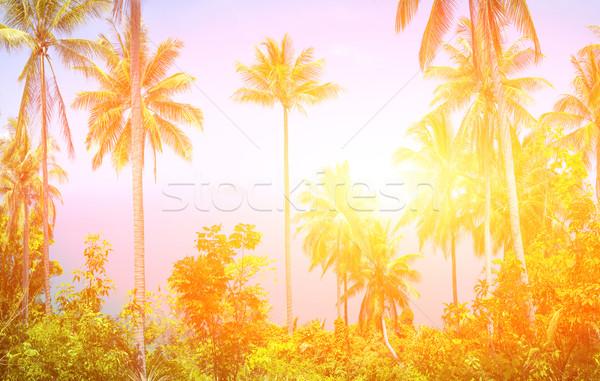 Trópusi kilátás szép kókusz pálmafák Thaiföld Stock fotó © goinyk