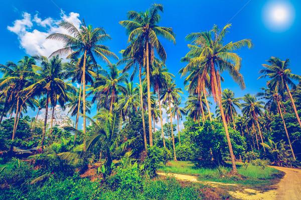 Seyahat manzara tropikal palmiye tarla krabi Stok fotoğraf © goinyk