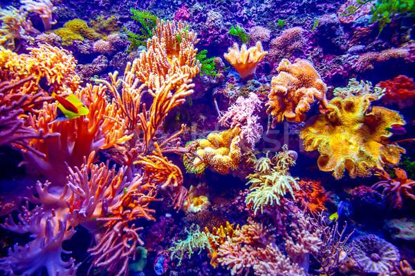 коралловый риф тропические рыбы солнечный свет природы пейзаж океана Сток-фото © goinyk