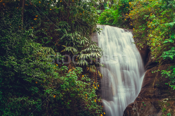 Waterfall on Sri Lanka,Horton Place Stock photo © goinyk