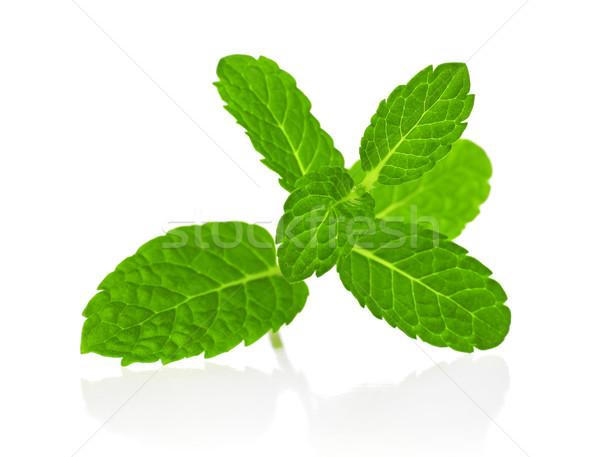 Mint geïsoleerd witte plant Spice close-up Stockfoto © goir