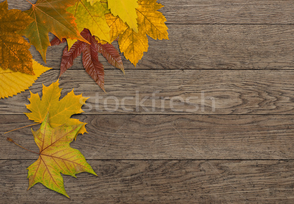 Autumn leafs Stock photo © goir