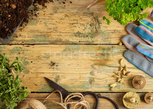 ストックフォト: ツール · 植物 · 園芸用具 · 木材 · コピースペース · 花