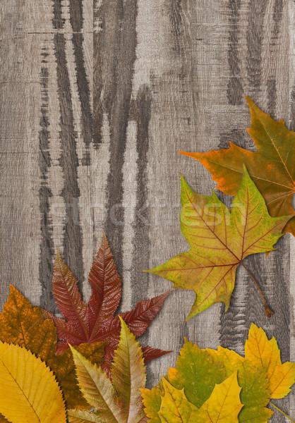 Autumn leafs on wood Stock photo © goir
