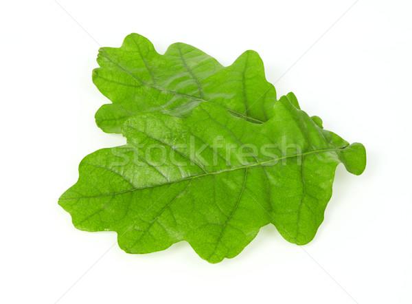 Oak leafs Stock photo © goir