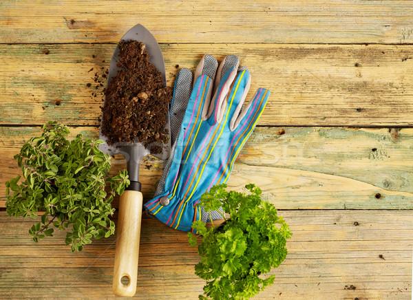 Plants, shovel and gloves Stock photo © goir
