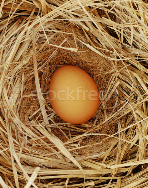 Free range egg Stock photo © goir
