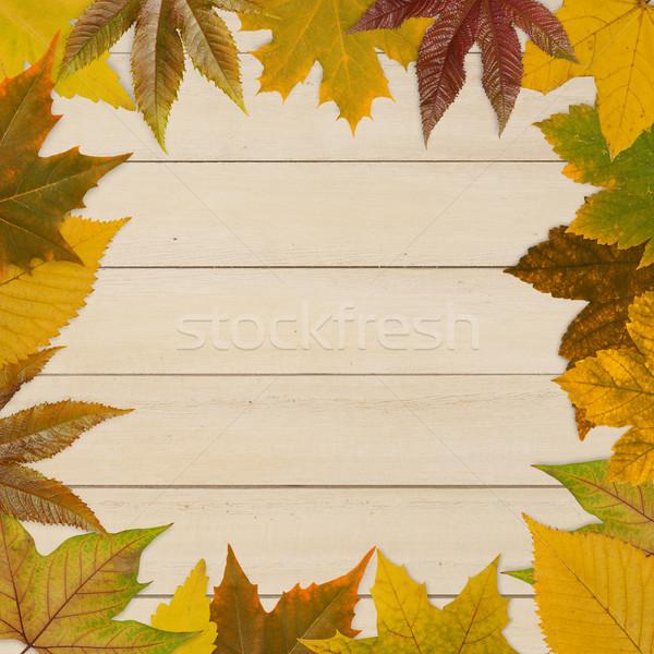 Photo stock: Automne · cadre · bois · bois · nature · horizons