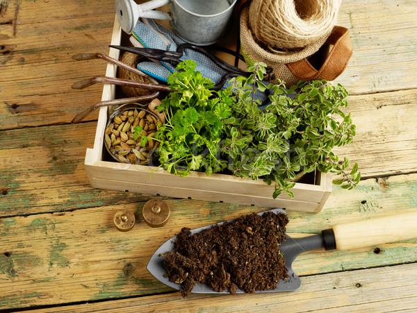 ガーデニング 植物 園芸用具 木材 花 ストックフォト © goir
