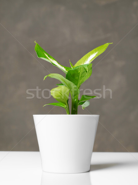Usine pot décoration table fleur nature Photo stock © goir