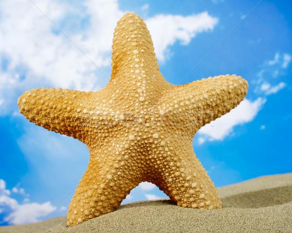 ヒトデ ビーチ 砂 空 太陽 旅行 ストックフォト © goir