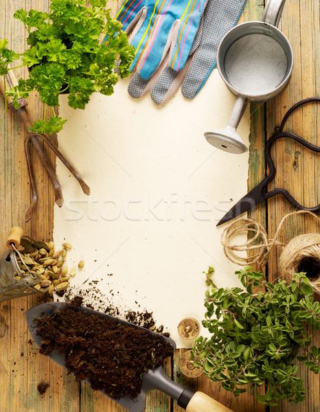 садоводства оборудование растений чистый лист бумаги цветок Сток-фото © goir