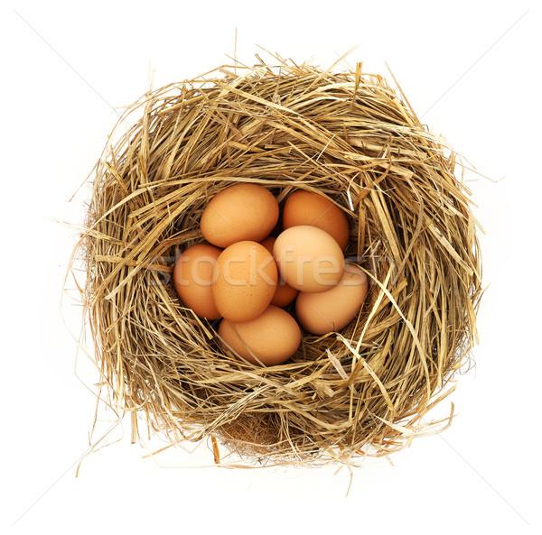 Ovos ninho isolado branco fotografia Foto stock © goir