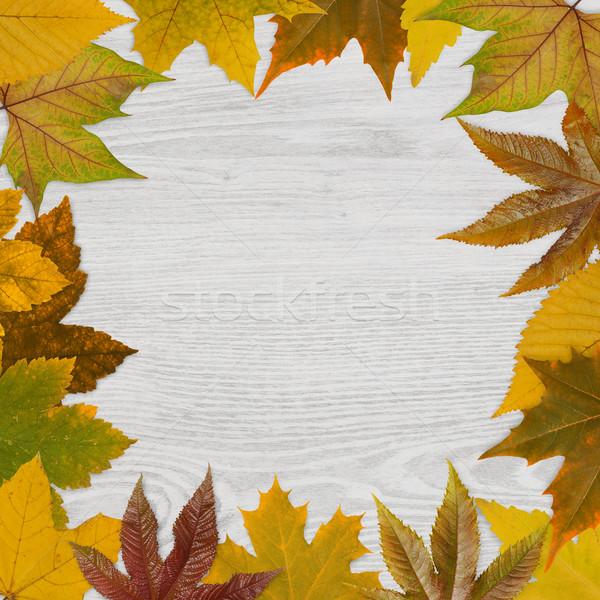 ősz keret fa fából készült természet hátterek Stock fotó © goir