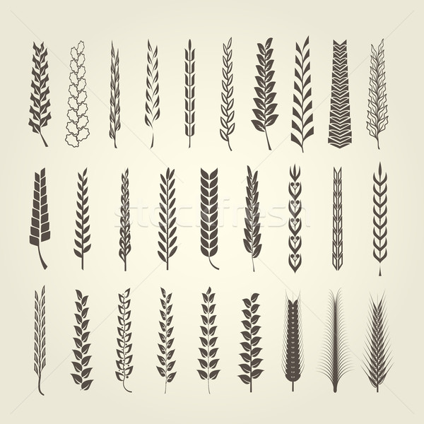 小麦 ライ麦 コレクション 異なる スタイル シルエット ストックフォト © gomixer