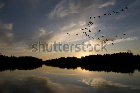 гусей закат посадка деревья оранжевый пространстве Сток-фото © Gordo25