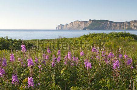 Полевые цветы избирательный подход передний план цветы природы путешествия Сток-фото © Gordo25
