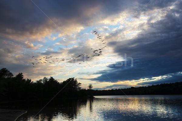 Ganzen vliegen zonsondergang naar grond noordelijk Stockfoto © Gordo25