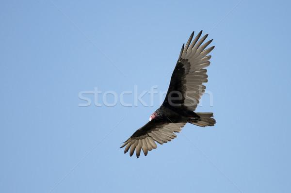 Grande profundo blue sky liberdade asas Foto stock © Gordo25