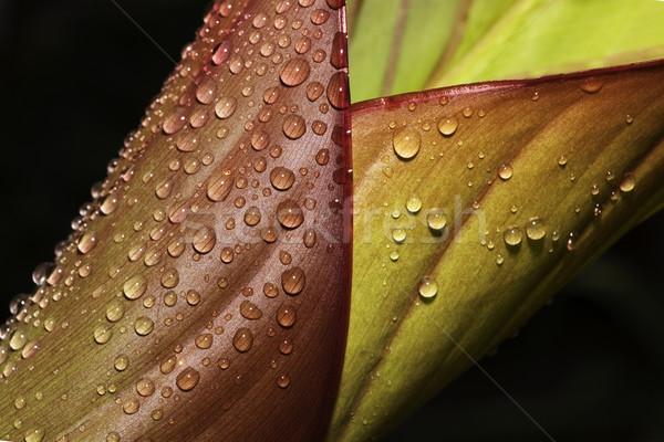 Abstract Leaf Stock photo © Gordo25