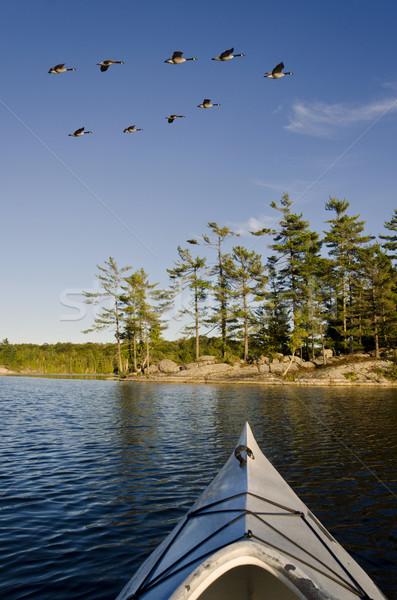 ギース カヤック 北方 湖 群れ 島 ストックフォト © Gordo25
