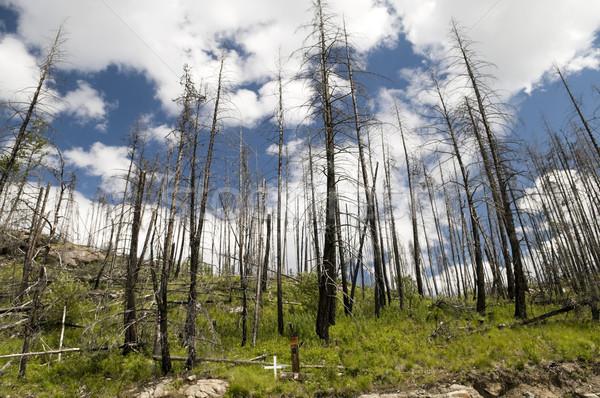 Incendios forestales nuevos crecimiento interior británico montana Foto stock © Gordo25